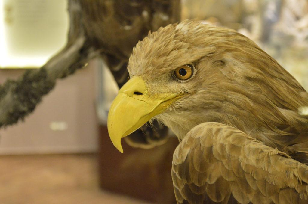 Natural history museum of Meteora KidsLoveGreece.com